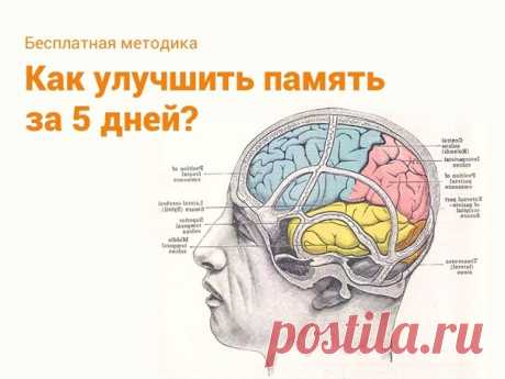 🤚🏻 Прокачай свою память за 5 дней 👇🏻    Узнай:  + Как устроена твоя память и что мешает тебе запоминать?  + Как выполнять вычисления в уме?  + Как запоминать списки?  + Как эффективно запоминать иностранные слова?  + Как быстро запомнить имя человека?  + Как повысить концентрацию и стать внимательнее?   Нажми, чтобы прокачать свой мозг👇🏻