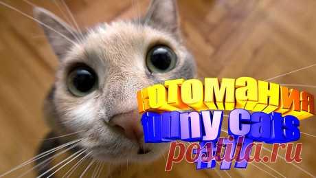 коты смешные видео, смешное видео коты, видео котов смешное, кот видео смешное, видео для котов, том кот видео, видео приколы котов, коты видео приколы, видео о котах, смешные животные, животные смешное видео, смешное видео животные, животные смешно, смешное животные, приколы коты, приколы для котов, приколы с котом, смешные кошки, смешное видео кошки, кошка смешная, смешное видео кошек, смешных кошек, смешное видео кошка, кошка смешная видео, смешно про кошек, смешные кошек, видео с кошками