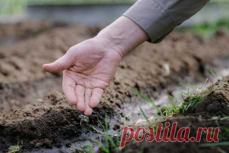 Что сажают на бывшей капустной грядке, а чему там не место   Идеальный огород   Яндекс Дзен