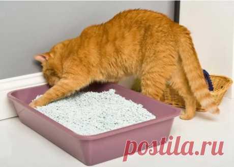 Почему у одних дома пахнет кошками, а у других нет при наличии питомцев в обоих случаях   Кошка.ru   Яндекс Дзен
