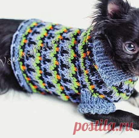 Джемпер для собаки спицами Смешные, озорные, но такие преданные... Уделите внимание воим маленьким верные друзьям - свяжите к наступающим холодам симпатичные свитерочки.