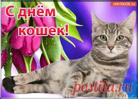 Картинки и Открытки с Днем Кошек