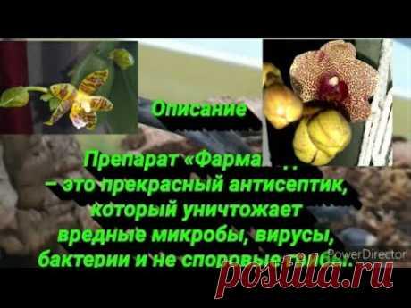 🔥⚡ОРХИДЕИ БОЛЬШЕ НЕ выбрасываю/Просто полей 1 раз в мес/Орхидеи ЗА ЦВЕТУТ ВСЕМ НА ЗАВИСТЬ