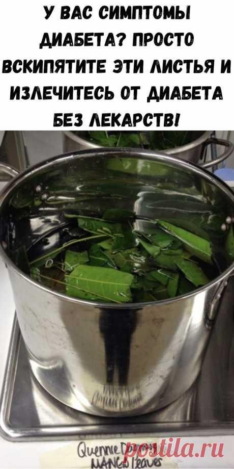 У вас симптомы диабета? Просто вскипятите эти листья и излечитесь от диабета без лекарств! - Полезные советы красоты