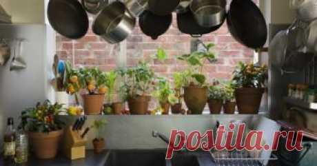 5 самых неприхотливых растений для кухни Ничто так не украшает и не наполняет жизнью интерьер, как красивые комнатные растения. Но часто хозяюшки не ставят их на кухне, ведь это комната с особым микроклиматом.