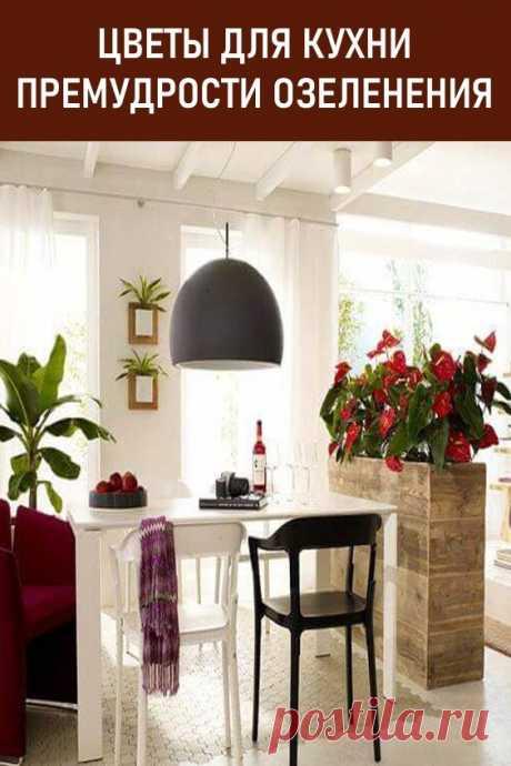Цветы для кухни — как источник уюта и гармонии. Стоит уточнить, что маленькая по метражу кухня не приемлет больших по размеру посадочных материалов. Цветы на кухню  выбираются исходя из пропорций, поэтому более уместным вариантом озеленения могут стать небольшие  посадочные культуры, например:  узамбарская фиалка, зебрина... #дом #уют #цветы #цветыдлякухни