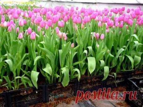 Выращивание цветов в теплице как бизнес | Тысяча и одна идея