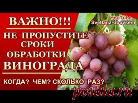 ОБРАБОТКА ВИНОГРАДА С РАННЕЙ ВЕСНЫ .ОТ ОИДИУМА, МИЛДЬЮ , АНТРАКНОЗА,КЛЕЩЕЙ,СЕРОЙ ГНИЛИ.. Опрыскав виноград перед цветением мы защищаем его от разных заболева...