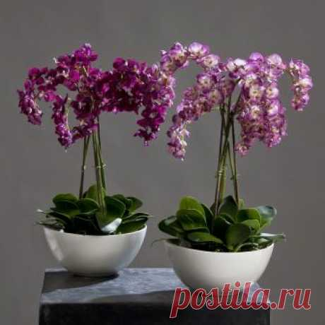 Секреты рассадки орхидей: Как 1 растение превратить в 100!