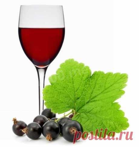 Вино из черной смородины с сахаром рецепт с фото - 1000.menu