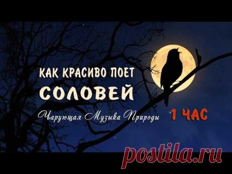Как красиво поет соловей ночью в лесу слушать 1 ЧАС 🌿 Божественно! Чарующие звуки природы для души!
