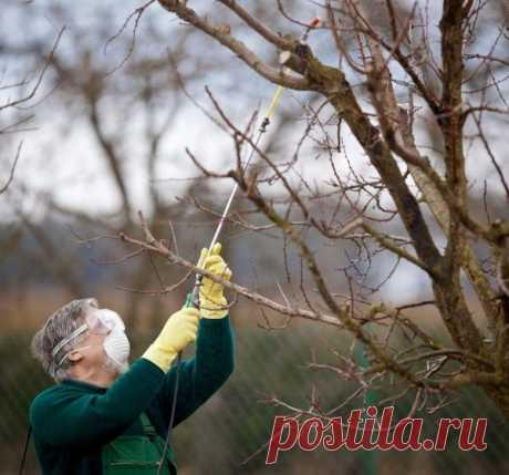 Обработайте сад так! Необходимая защита сада от вредителей и болезней осенью