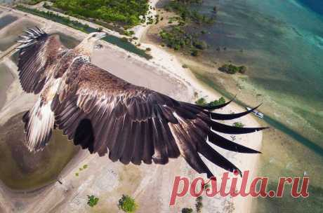 Фото дня. Орел летит над национальным парком Бали-Барат, Бали, Индонезия.