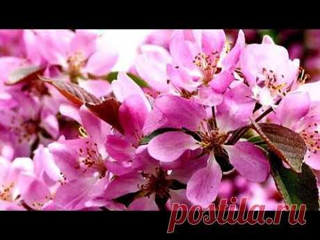 Дыхание Весны! Красивая Цветущая Природа! Для Прекрасного Настроения!