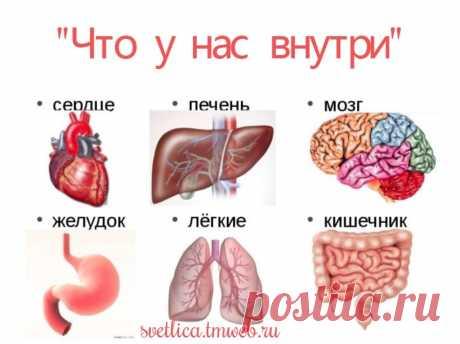 zhenskie-polovie-organi-snaruzhi-i-iznutri-video-svingeri
