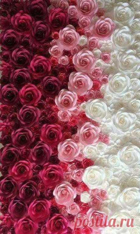 Розы и Фото фонов