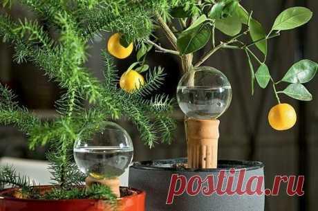Как изготовить систему автополива цветов своими руками, чтобы не переживать за любимые растения во время отпуска? | Цветочный мир | Яндекс Дзен