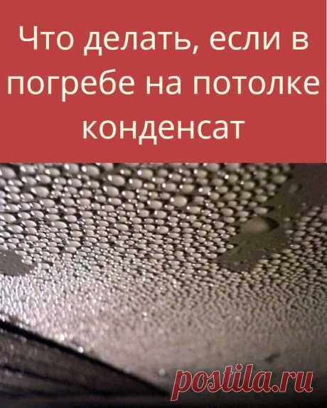 Что делать, если в погребе на потолке конденсат