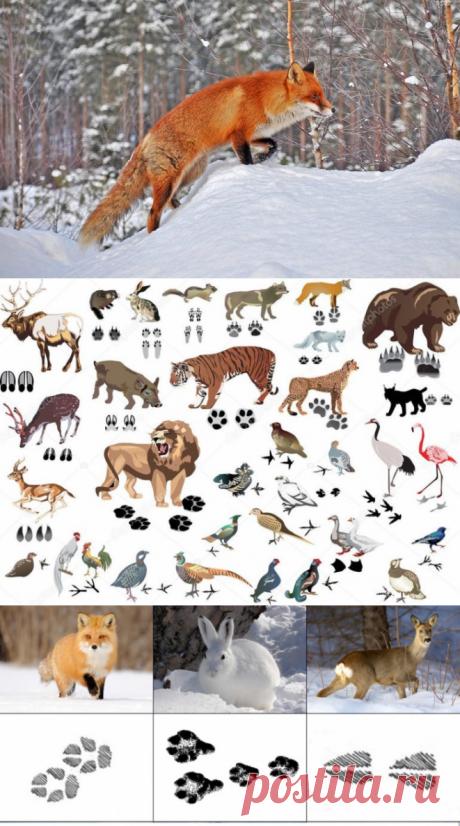 Особенности и характеристики следов животных на снегу