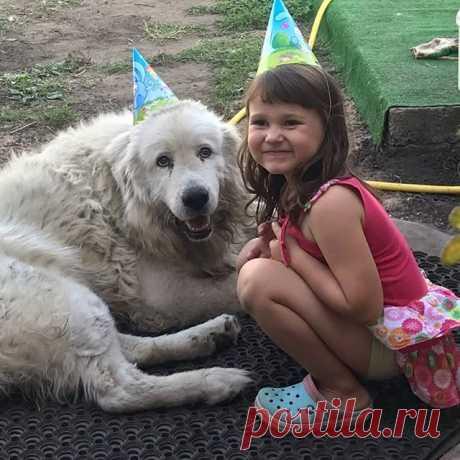 Photo by Татьяна Образцова on September 08, 2020. На изображении может находиться: 1 человек, собака и на улице.