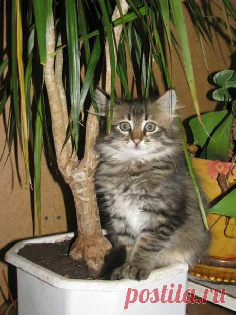 Обалденные фото, в которых вся суть котов)  Когда человек уходит на целый день, а ты ждешь его один, некормленый, неглаженый, нецелованный         Его Котейшество желает завтракать в 5:23 и ни минутой позже          Моя кошка всегда проверяет,…
