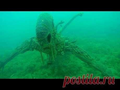 Какие Существа Живут в Мертвой Зоне Океана - YouTube