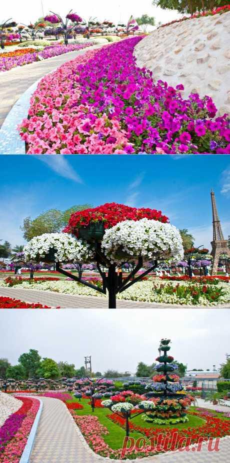 Цветочный сад Аль-Айн