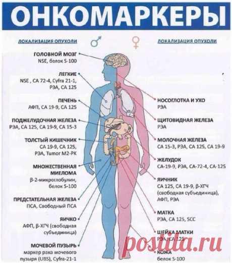 ОНКОМАРКЕРЫ  Перечень онкомаркеров, которые имеют значение при диагностике злокачественных опухолей:  - АФП (альфа-фетопротеин) - онкомаркер первичного рака печени.  Данные получаемые по результатам теста на АПФ могут быть использованы для диагностики присутствия пороков при развитии плода, для контроля и диагностики при лечении рака печени и злокачественных опухолей половых желез. Повышение уровня альфа-фетопротеина может свидетельствовать о возможном наличии гепатита, хр...