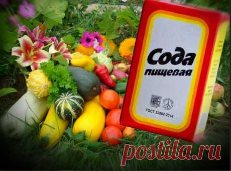 Пищевая сода - спасение для сада и огорода. | Дачные советы | Яндекс Дзен