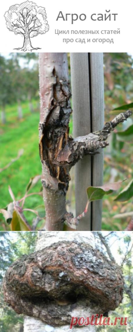 Черный рак плодовых деревьев - порожение коры у дерева фото