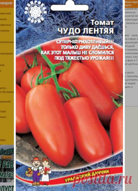 Урожайные низкорослые томаты для открытого грунта | уДачный проект | Яндекс Дзен