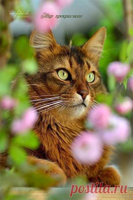 Хорошему коту каждый день март...