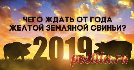 Что нам обещает год желтой земляной свиньи. - БАгиня