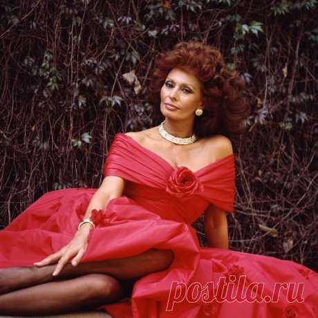 К 85-летию Софи Лорен: 100 кадров с великой дивой - Кино Mail.ru