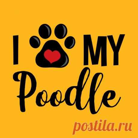 I Love My Poodle - V2 - Poodles - Camiseta | TeePublic MX