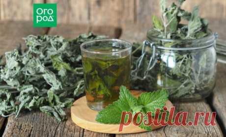Чай из листьев: какие растения можно и нужно заваривать | Дачная кухня (Огород.ru)