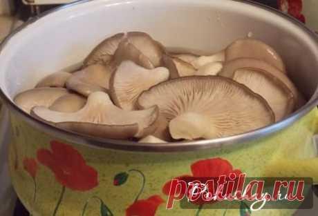 Как приготовить грибной суп из вешенок: рецепт грибного супа из вешенок с фото