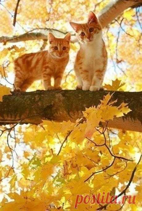 Осенние рыжики ... :)))