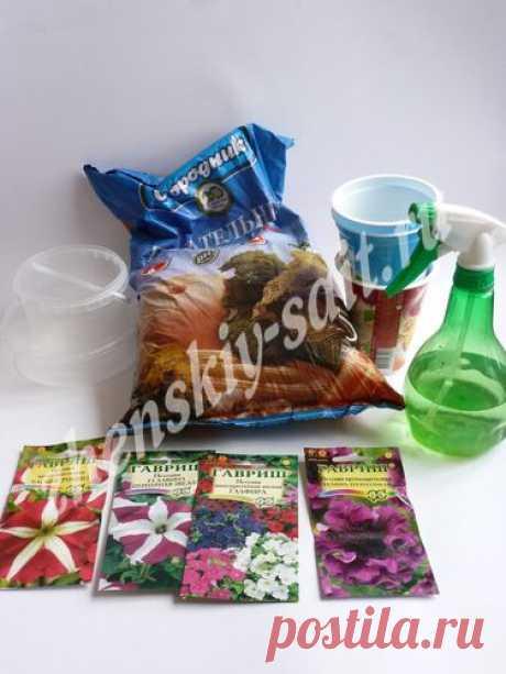Как вырастить петунию из семян в домашних условиях (с фото)