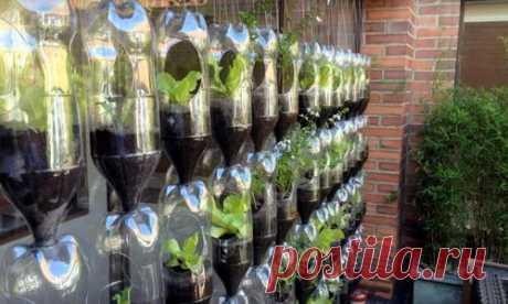 Вертикальная грядка из пластиковых бутылок своими руками: фото, мастер-класс