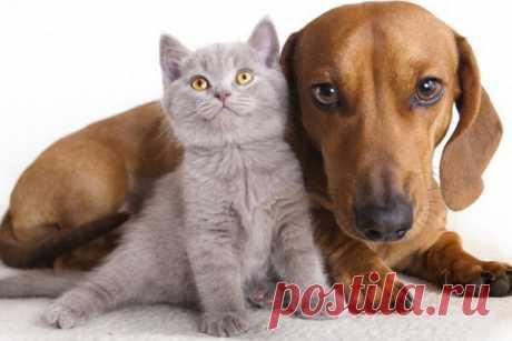 Сколько живут кошки и собаки?   ПИТОМЦЫ   Яндекс Дзен