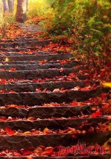 El otoño - el tiempo de los paseos largos silenciosos...