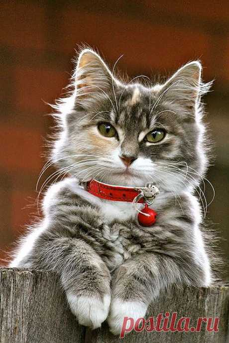 """""""there Is Something About The Presence Of A Cat That Seems To Take The Bite Out Of Being Alone."""" –louis J Camuti"""