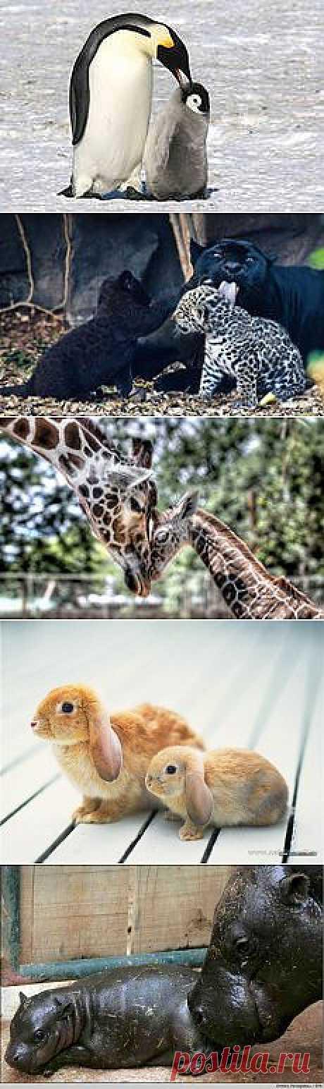 животные малыши и мамы: 38 тыс изображений найдено в Яндекс.Картинках