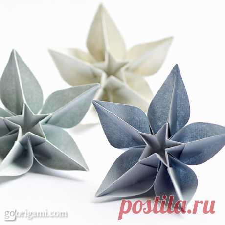 Carambola Flowers by Carmen Sprung   Go Origami!