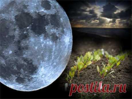 Когда нужно сажать рассаду по Лунному календарю Люди достаточно давно заметили влияние Луны наразвитие растений. Благодаря многовековым наблюдениям унас есть знания отом, какие работы вогороде эффективнее всего проводить при разных фазах нашего естественного спутника.