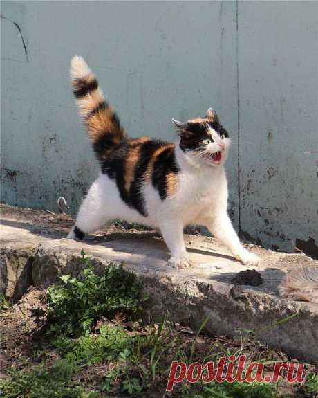 Кот, проглотивший гимнастический козел..