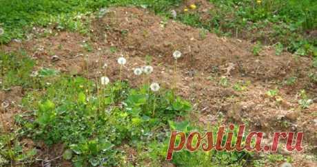 """Как избавиться от сорняков – секреты """"чистых"""" грядок Прополка грядок и цветников – занятие утомительное, но необходимое. Ведь их наличие на грядке сокращает урожай в разы. Способов покончить с непрошеными гостями много. Выбирайте, какой подходит вам больше всего."""