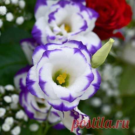 «🌺 Цветы 🌺 »  в Яндекс.Коллекциях