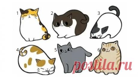 Психологический тест: выберите одну из кошек, чтобы больше узнать о своём характере - 10 Июня 2020 - Дискотека